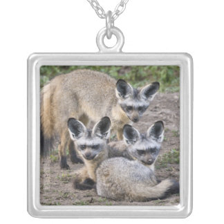 Africa. Tanzania. Bat-Eared Foxes at Ndutu in Silver Plated Necklace