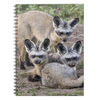Africa. Tanzania. Bat-Eared Foxes at Ndutu in Spiral Note Books