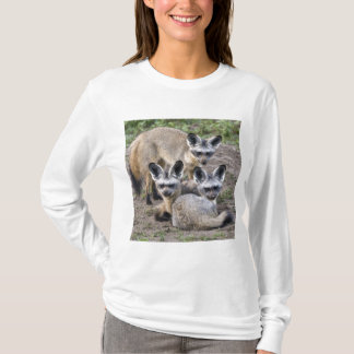 Africa. Tanzania. Bat-Eared Foxes at Ndutu in T-Shirt