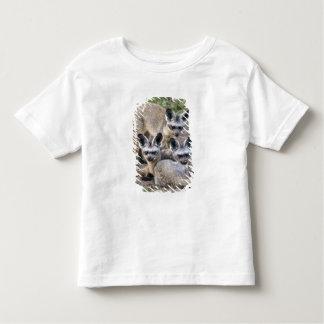 Africa. Tanzania. Bat-Eared Foxes at Ndutu in Toddler T-Shirt