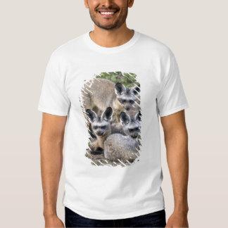 Africa. Tanzania. Bat-Eared Foxes at Ndutu in Tshirt