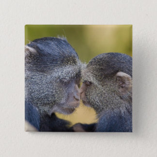 Africa. Tanzania. Blue Monkey mother with young 15 Cm Square Badge