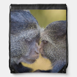 Africa. Tanzania. Blue Monkey mother with young Drawstring Bag