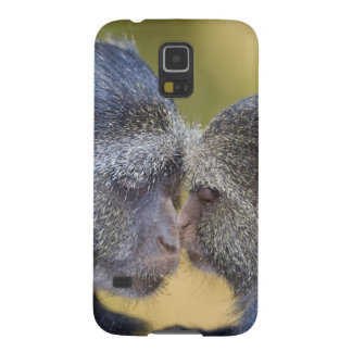 Africa. Tanzania. Blue Monkey mother with young Galaxy S5 Case