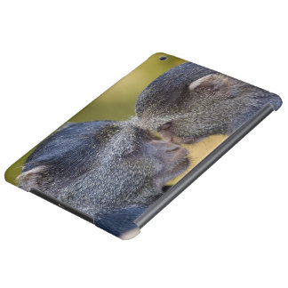Africa. Tanzania. Blue Monkey mother with young iPad Air Cases