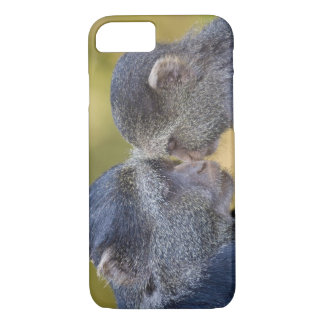 Africa. Tanzania. Blue Monkey mother with young iPhone 8/7 Case