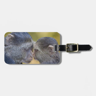 Africa. Tanzania. Blue Monkey mother with young Luggage Tag