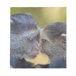 Africa. Tanzania. Blue Monkey mother with young Notepad