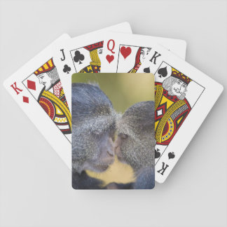 Africa. Tanzania. Blue Monkey mother with young Playing Cards