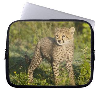 Africa. Tanzania. Cheetah cub at Ndutu in the Laptop Sleeve