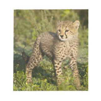 Africa. Tanzania. Cheetah cub at Ndutu in the Memo Notepads