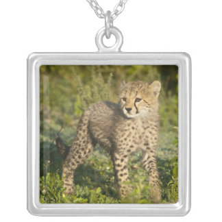 Africa. Tanzania. Cheetah cub at Ndutu in the Silver Plated Necklace