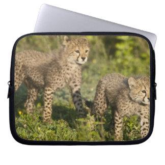Africa. Tanzania. Cheetah cubs at Ndutu in the Laptop Sleeve