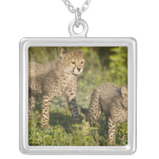 Africa. Tanzania. Cheetah cubs at Ndutu in the Silver Plated Necklace