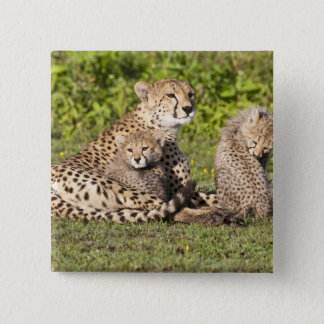 Africa. Tanzania. Cheetah mother and cubs 2 15 Cm Square Badge