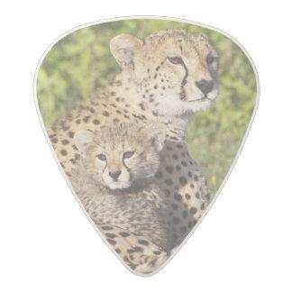 Africa. Tanzania. Cheetah mother and cubs 2 Acetal Guitar Pick
