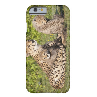 Africa. Tanzania. Cheetah mother and cubs 2 Barely There iPhone 6 Case