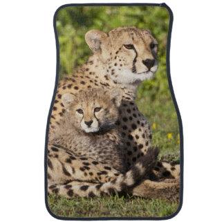 Africa. Tanzania. Cheetah mother and cubs 2 Car Mat
