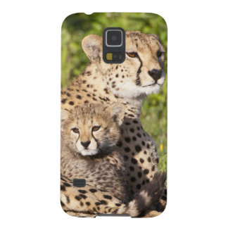 Africa. Tanzania. Cheetah mother and cubs 2 Case For Galaxy S5