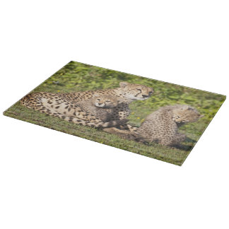 Africa. Tanzania. Cheetah mother and cubs 2 Cutting Board
