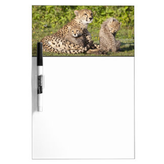 Africa. Tanzania. Cheetah mother and cubs 2 Dry Erase Board
