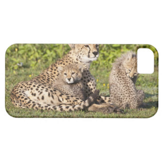 Africa. Tanzania. Cheetah mother and cubs 2 iPhone 5 Cover
