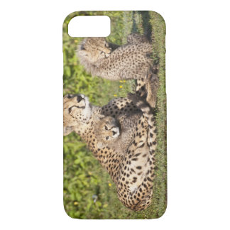 Africa. Tanzania. Cheetah mother and cubs 2 iPhone 7 Case