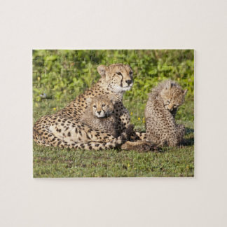 Africa. Tanzania. Cheetah mother and cubs 2 Jigsaw Puzzle