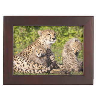 Africa. Tanzania. Cheetah mother and cubs 2 Keepsake Box