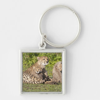 Africa. Tanzania. Cheetah mother and cubs 2 Key Ring