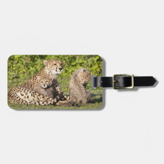 Africa. Tanzania. Cheetah mother and cubs 2 Luggage Tag