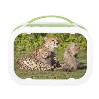 Africa. Tanzania. Cheetah mother and cubs 2 Lunch Box