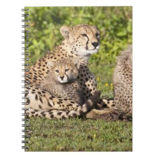 Africa. Tanzania. Cheetah mother and cubs 2 Notebook