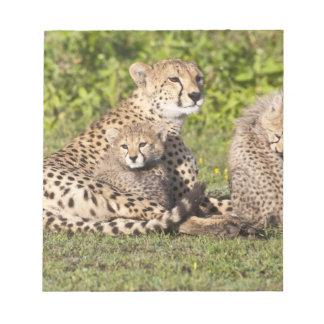 Africa. Tanzania. Cheetah mother and cubs 2 Notepad