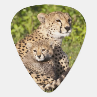 Africa. Tanzania. Cheetah mother and cubs 2 Plectrum