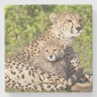Africa. Tanzania. Cheetah mother and cubs 2 Stone Coaster