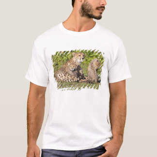 Africa. Tanzania. Cheetah mother and cubs 2 T-Shirt