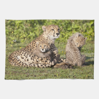 Africa. Tanzania. Cheetah mother and cubs 2 Towel
