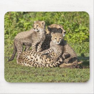 Africa. Tanzania. Cheetah mother and cubs Mouse Mat