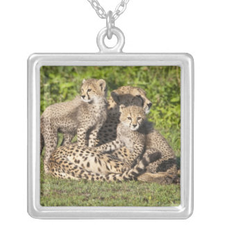 Africa. Tanzania. Cheetah mother and cubs Silver Plated Necklace