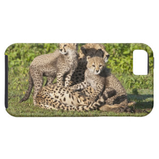 Africa. Tanzania. Cheetah mother and cubs Tough iPhone 5 Case