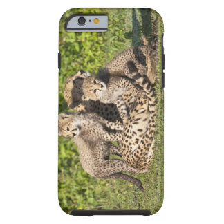 Africa. Tanzania. Cheetah mother and cubs Tough iPhone 6 Case