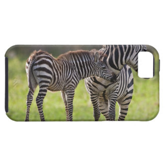 Africa. Tanzania. Common Zebra mother and baby iPhone 5 Case
