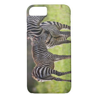 Africa. Tanzania. Common Zebra mother and baby iPhone 8/7 Case