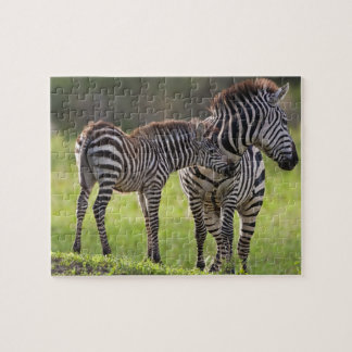 Africa. Tanzania. Common Zebra mother and baby Jigsaw Puzzle