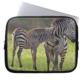 Africa. Tanzania. Common Zebra mother and baby Laptop Sleeve