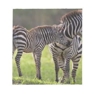 Africa. Tanzania. Common Zebra mother and baby Notepad