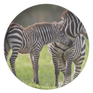 Africa. Tanzania. Common Zebra mother and baby Plate