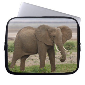 Africa. Tanzania. Elephant at Lake Manyara NP. Laptop Sleeve