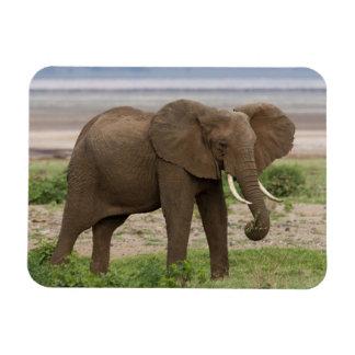 Africa. Tanzania. Elephant at Lake Manyara NP. Magnet